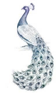 Realistic Peacock Drawings
