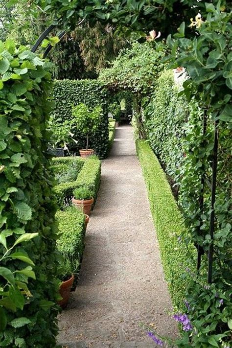 hedge gardens 20 best images about hedges on pinterest gardens garden arbor and evergreen shrubs
