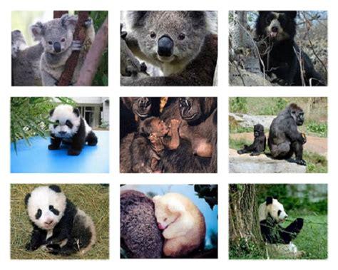 animales en extincion motivando  una desicion