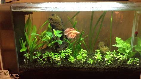 Aquascaping For Beginners by Aquascaping For Beginners Fish Update