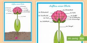 Aufbau Einer Blume : new aufbau einer bl te poster f r die ~ Whattoseeinmadrid.com Haus und Dekorationen