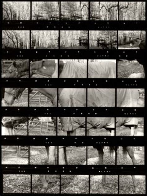 contact sheets images  pinterest contact sheet