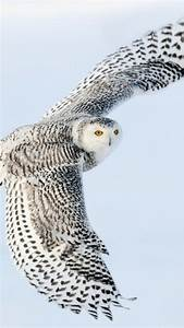 87 best Snowy Owl images on Pinterest | Beautiful birds ...