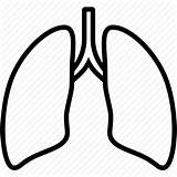 Lungs Lung Outline Clipart Icon Anatomy Organ Clip Transparent Medical Svg Vector Icons Coloring Sketch Clipartmag Webstockreview Template sketch template