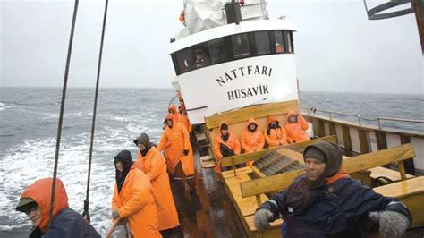 icelands whale hunters  watchers uneasy bedfellows
