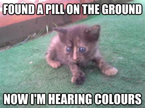 Scared Cat Meme - found a pill on the ground now im hearing colours scared cat
