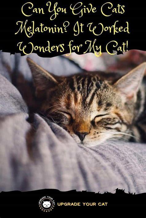 melatonin for cats in heat