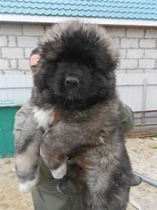 The gallery for --> Russian Prison Dogs