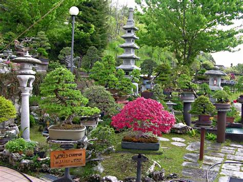 Dove Si Trova Il Giardino  Armando Dal Col Bonsai