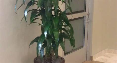 davanzali interni in legno contenitore per piante vasi e fioriere contenitore per