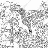 Coloring Pages Hummingbird Flower Adult Flowers Etsy Zentangle Floral Adults Animal sketch template