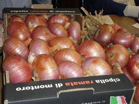 coltivare cipolla in vaso semina cipolle coltivare orto seminare cipolle
