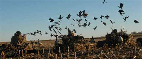 tips  hunting geese