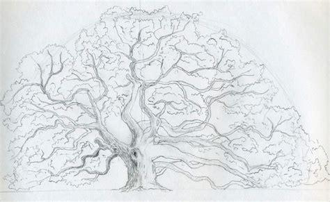 draw  oak tree angel oak tree