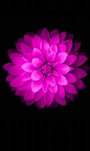 Flower iPhone Wallpapers   PixelsTalk.Net