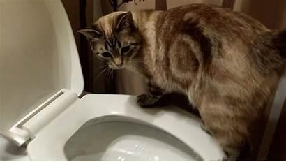 Catster Toilet