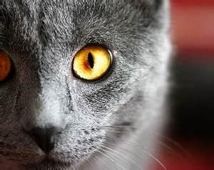 Gray Cats - Harmony & Hypocrisy
