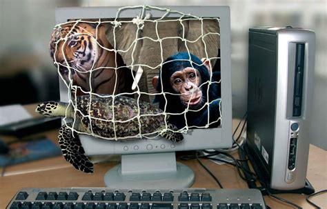 le commerce des animaux sauvages sur internet