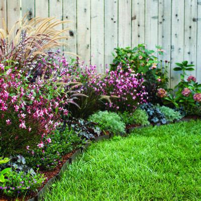 perennial border plants for sun border plants full sun image search results