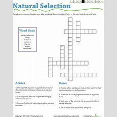Life Science Crossword Natural Selection  Worksheet Educationcom