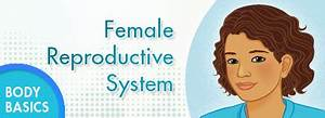 Kidshealth  Female Reproductive System