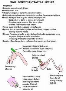 Instant Anatomy - Abdomen - Vessels - Arteries