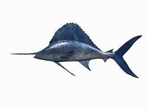 Handmade Metal Atlantic Sailfish Sculpture | Sport Fishing ...