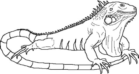 Coloring Iguana by Iguana Coloring Pages Printable Coloring Pages