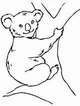 Koala Coloring Pages Bear Printable sketch template