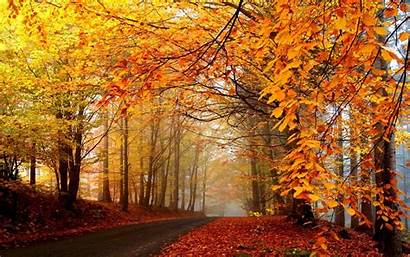 Autumn Wallpapers Road Forest Path Dirt