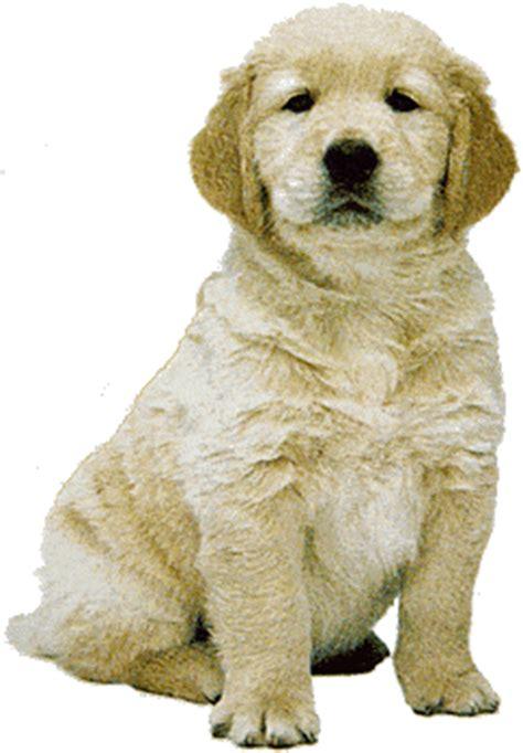 newfoundland puppy cliparts   clip art  clip art  clipart library
