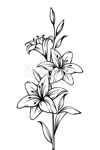 Lilie Blüht Vektor Schwarzweiß Kontur Zeichnen Stock
