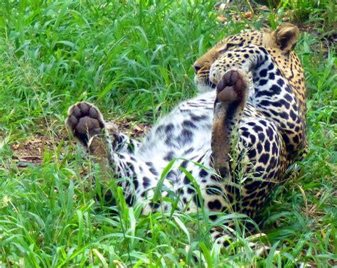 Nairobi Safari Walk - Kenyan Moments