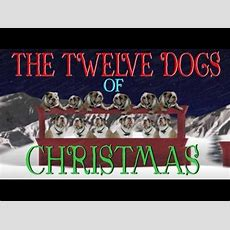 12 Days Of Christmas (dog Version) Youtube