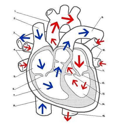 Heart Labeling  Diabetes Inc