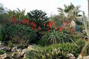 Mimosa Résistant Au Froid : aloe arborescens jardin de hyeres nature faune flore regions ~ Melissatoandfro.com Idées de Décoration