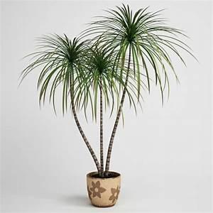 Zimmerpflanzen Für Dunkle Ecken : zimmerpflanzen f r dunkle r ume ~ Michelbontemps.com Haus und Dekorationen