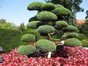 Pflanzen Japanischer Garten : kostenloses foto japanischer garten gr n baum ~ Lizthompson.info Haus und Dekorationen