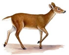 HD wallpapers free printable coloring pages of deer