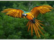Die reiche Tier und Pflanzenwelt im Amazonas Regenwald!