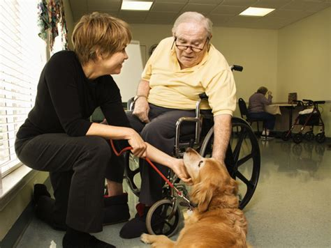 animal assisted therapy petfinder