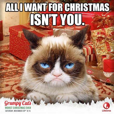 Cat Christmas Memes - 2669 best images about grumpy cat on pinterest gift quotes memes humor and grumpy cat quotes
