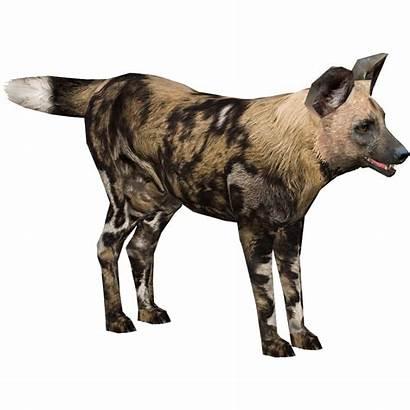 Wild Dog African Sim Wiki Zt2 Library