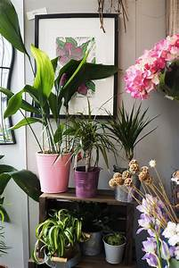 Join, The, 1970s, House, Plants, Revolution
