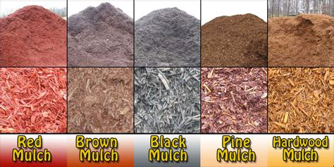 Why It's Important To Use Mulch!