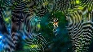 Spinnen Fernhalten Wohnung : spinnen fernhalten mit dieser pflanze kommen spinnen nicht in die wohnung ~ Whattoseeinmadrid.com Haus und Dekorationen
