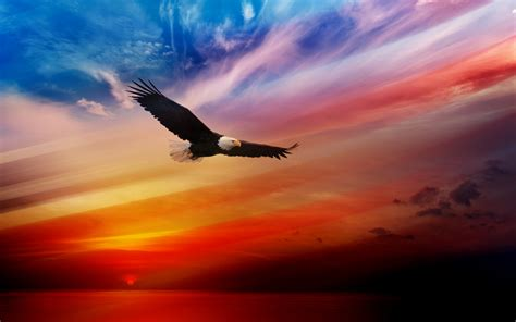 american eagle wallpapers high quality resolution