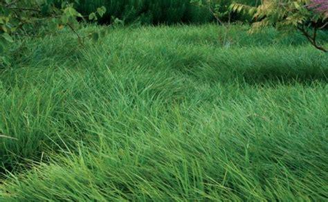 Low Maintenance Alternatives To Lawns Finegardening