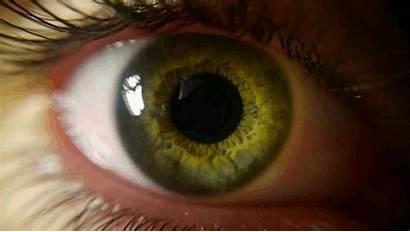 Ojo Ojos Movimiento Animado Con Animados Gifimage