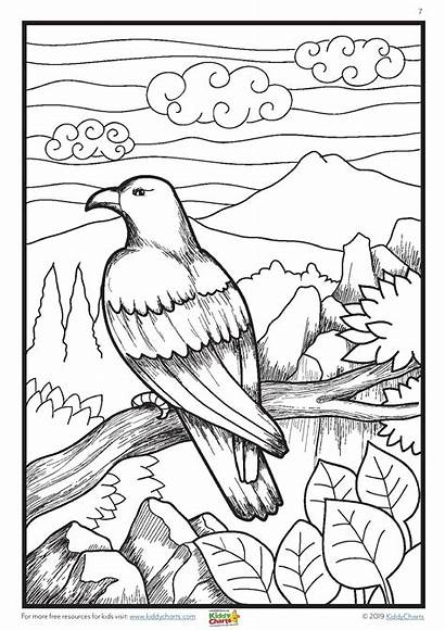 Colouring Mindful Animals Wild Adults Printable